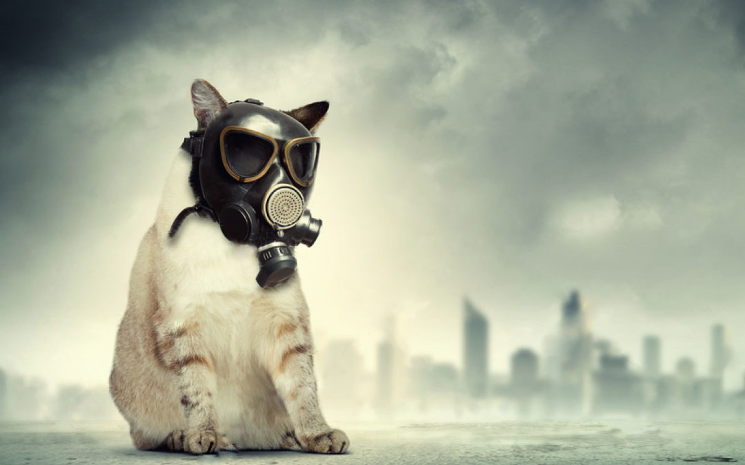 The Bad Effects of Haze on Your Pets