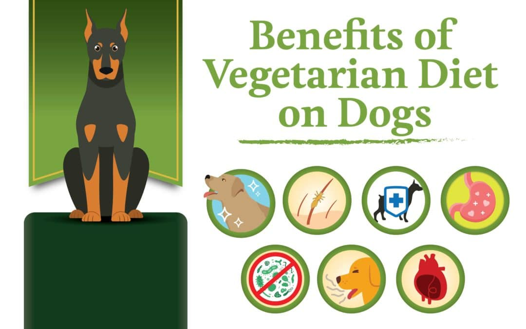 Benefits of a Vegetarian Diet on Dogs